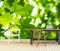 Vlies fotobehang Groene bladeren in de zon - Natuurlijke look behang | Muurmode.nl Home Wallpaper, Wallpaper Murals, Outdoor Furniture Sets, Outdoor Decor, 3d Wall, Own Home, Entrance, Exterior, Modern
