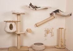Diy Climbing Wall, Cat Climbing, Animal Room, Cat Wall Shelves, Cat Gym, Cat Anatomy, Cat Playground, Cat Accessories, Space Cat