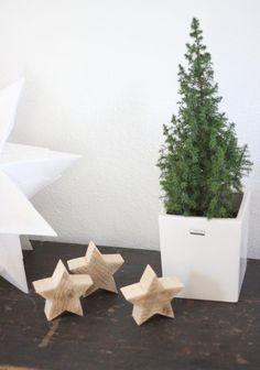 winter star