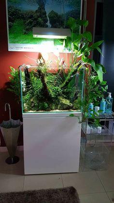 Fantastic aquatic vegetation in a aquarium, must try