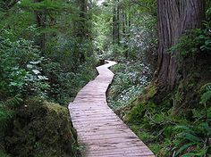 Walk to Tofino Hot Springs, Tofino, BC...SO beautiful!! This pic doesn't give it justice