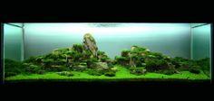 106º Pasqual Buonpane (Italia)  The International Aquatic Plants Layout Contest 2010