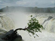 HOGENAKKAL WATER FALLS, TAMILNADU