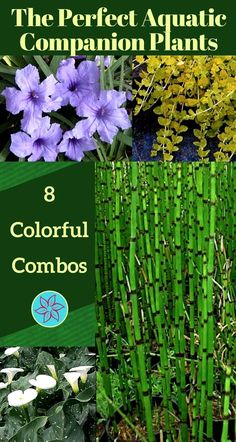 The soothing appearance and sound of water in the backyard or on a patio is always welcoming. but it's not a water garden until you add plants! Water Garden Plants, Bog Plants, Container Water Gardens, Water Plants For Ponds, Garden Pond, Outdoor Ponds, Ponds Backyard, Plantas Indoor, Goldfish Pond