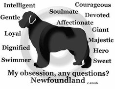 Newfoundland Newfie Dog My Obsession Any by PaintedPooches