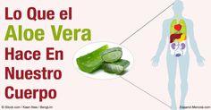 El aloe vera viene con una amplia variedad de propiedades curativas maravillosas. https://articulos.mercola.com/sitios/articulos/archivo/2016/05/24/aloe-vera-para-todo-el-cuerpo.aspx