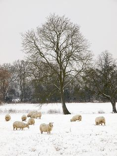 Down Ampney In The Snow, Cotswolds