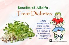 Benefits of Alfalfa - Treat Diabetes