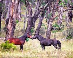 Re-affirming Friendship Carol Hancock Photography http://www.carolhancock.com.au