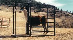 Northern Colorado Llamas - Chutes