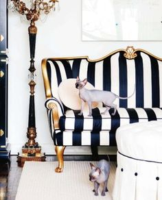 Love the drama of the stripes - so bold yet classic. want this couch without the hairless cats. ew.