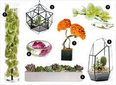 Modern botanicals