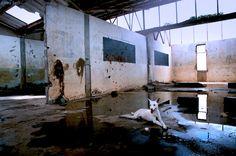Amina Bech, The White Dog, Aparanga, North Uganda White Dogs, Abandoned Buildings, Uganda, Scene, Artwork, Photographers, Painting, Inspire, Animals