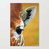 Search   Society6