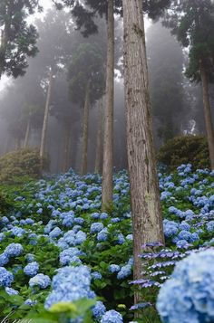 Forest of hydrangea of fog / Beautiful Gardens, Beautiful Flowers, Beautiful Places, Nature Aesthetic, Flower Aesthetic, Pretty Landscapes, Wild Nature, Nature Scenes, Dream Garden