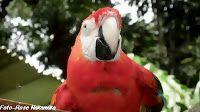Mira Fotos: Uma maravilhosa ave