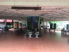 Volunteer in Costa Rica: Sloth/Mammal Conservation Amphibians, Mammals, Costa Rica Sloth, Turtle Conservation, Volunteer Abroad, Sea Turtles, Pet Care, Creatures, Park