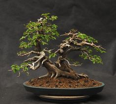 interesting bonsai
