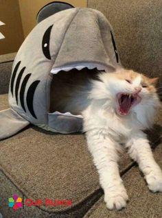 Pets Tips : Funny CATS guaranteed to make you laugh Funny cat compilation Funny Animal Jokes, Funny Cat Memes, Cute Funny Animals, Funny Animal Pictures, Animal Memes, Cute Baby Animals, Funny Humor, Animal Pics, Dog Humor
