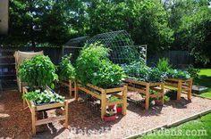 Old  peoples ways of  gardening