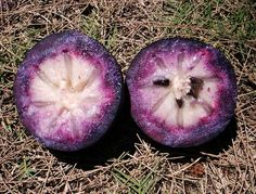 I ate one of these in Jamaica! Purple Star Apple: Rare Fruit Seeds and Exotic Tropical Fruit Exotic Food, Exotic Fruit, Tropical Fruits, Weird Fruit, Strange Fruit, Fruit And Veg, Fresh Fruit, Fruits And Veggies, Kinds Of Fruits
