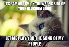 """I think most of these could be labeled """"Wednesday Cat Problems"""". Any of these sound like something your kitty would say? #cats #funny =^..^= 