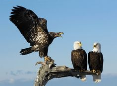 Bawler+by+Harry++Eggens+on+500px