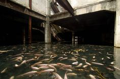 AN ABANDONED SHOPPING MALL FULL OF FISH