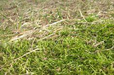 Sammaloituneen nurmikon hoito