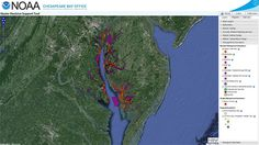 From historic reef boundaries to maps of the seafloor, this online mapping tool displays a range of information relevant to oyster restoration.