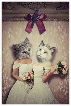 Check out this item in my Etsy shop https://www.etsy.com/uk/listing/464047990/mrs-mrs-wedding-card-lesbian-wedding