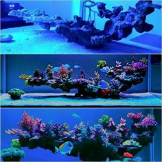 I like that not much of it touches the sand bed. Quite minimal and elegant – aquascaping Aquarium Aquascape, Reef Aquascaping, Saltwater Aquarium Setup, Coral Reef Aquarium, Aquarium Terrarium, Saltwater Fish Tanks, Marine Aquarium, Marine Fish Tanks, Marine Tank