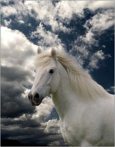 White Stallion.......awestruck!