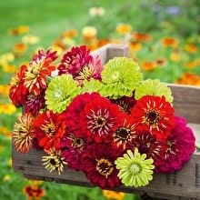 Flower Seeds from Sarah Raven | Quality Seeds from £1.95 | Sarah Raven