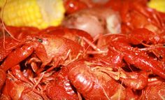 Groupon - $20 for $40 Worth of Cajun Seafood at Ragin Cajun in Multiple Locations. Groupon deal price: $20.00