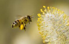 """Ces gens-là n'ont-ils donc pas d'enfants ni de petits-enfants ? Ne s'inquiètent-ils pas des effets de l'acétamipride, de la clothianidine et des autres néonicotinoïdes sur le développement cérébral du fœtus ? Ne prennent-ils pas conscience qu'ils nous précipitent vers un monde sans abeilles, sans bourdons, sans papillons, sans plus aucun insecte pollinisateur et donc sans nourriture ?""""... http://one-voice.fr/fr/blog/pes"""