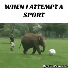 Im actually Okaaayy at sports but this elephant falling down is hilarious!