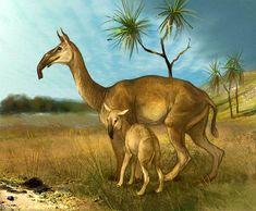 Prehistoric South American Ungulate Mammals are Relatives of Horses, Study Reveals Prehistoric World, Prehistoric Creatures, Animal Riddles, Extinct Animals, Weird Creatures, Fauna, Collie, Pet Birds, Animals And Pets