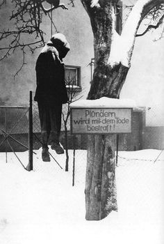 """As the Soviet army closed in on Königsberg in early April 1945, a German soldier was hanged by a sign reading """"Looting is punished by death""""."""