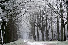 path along Aa in winter (Ter Apel, Westerwolde, The Netherlands)