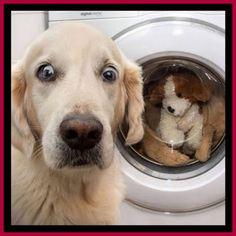 Super Cute Puppies, Cute Baby Dogs, Cute Little Puppies, Cute Funny Dogs, Cute Dogs And Puppies, Cute Little Animals, Cute Funny Animals, Doggies, The Dogs