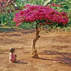 Plant+a+Tree+to+Prevent+Hunger+in+Uganda+at+The+Animal+Rescue+Site