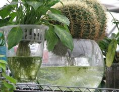 Hydroponic Containers with Plants and Flowers, 21 Eco Home Decorating Ideas