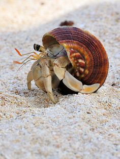 Hermit crabs, they are really cute! Research before getting one for Matty.