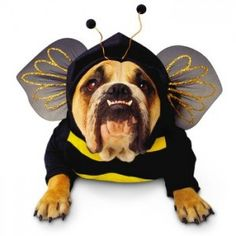 Zelda #Bumblebee #Dog #Costume $16.99