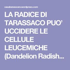 LA RADICE DI TARASSACO PUO' UCCIDERE LE CELLULE LEUCEMICHE (Dandelion Radish Can Kill Leukemia Cells) – La ForzaDellaNatura's Blog