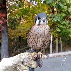 The kestrel bird - Tiere - Animais Funny Animal Memes, Cute Funny Animals, Cute Baby Animals, Funny Cute, Funny Dogs, Baby Wild Animals, Creepy Animals, Strange Animals, Animal Humor