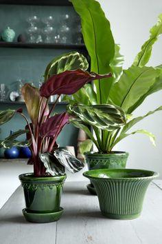 Green glazed pots by Bergs potter