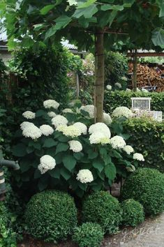 Best Small Yard Landscaping & Flower Garden Design Ideas Because you have a small garden, it doesn't want to work a lot. A small garden can be very exotic with just a little planning. Improving a beautiful modern garden [ … ] White Gardens, Small Gardens, Outdoor Gardens, Indoor Garden, Backyard Garden Landscape, Garden Bed, Small Garden Trees, Small Garden Front Yard, Very Small Garden Ideas
