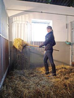 Prachtige paarden hooiruif van Landbouwwinkel.nl voor in de hoek van de paardenbox